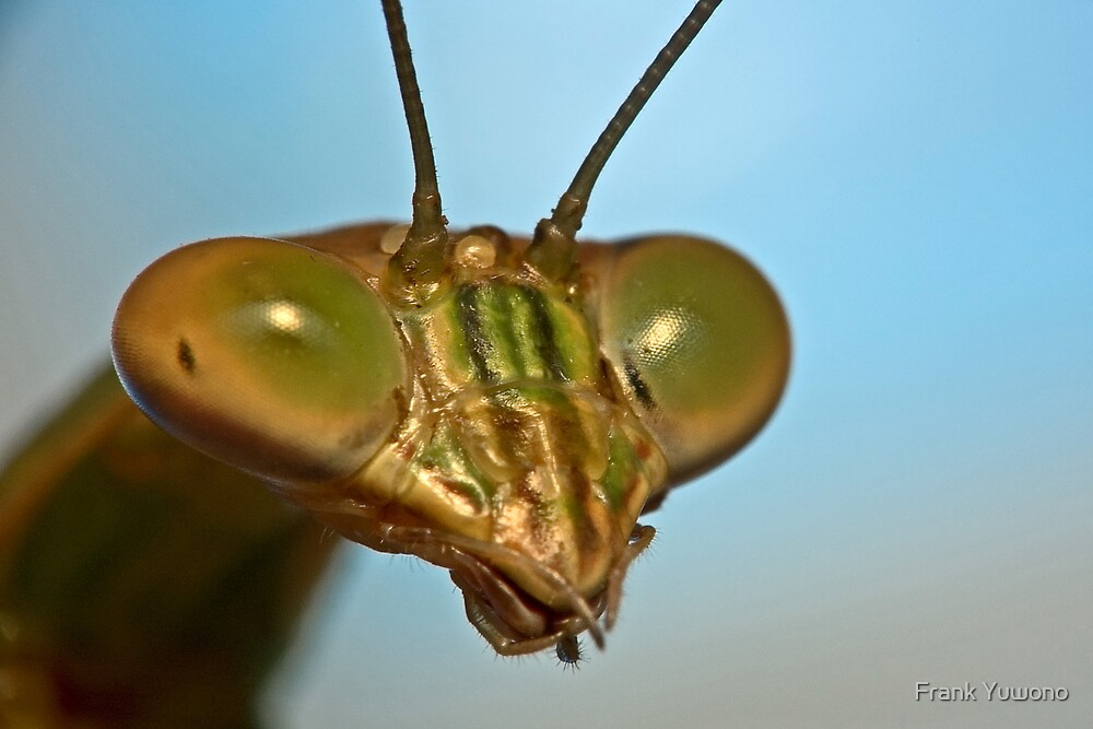 Mantis Face by Frank Yuwono
