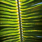 From beneath the Palm Frond. by Michael Lothian