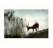 Impala reflection Art Print