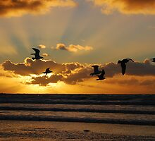 Sea-side sun-set gulls at IJmuiden by jchanders