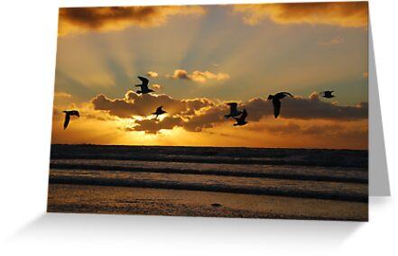 Sea-side sun-set gulls at IJmuiden by jchanders
