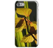 light and nature - luz y naturaleza iPhone Case/Skin