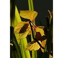 light and nature - luz y naturaleza Photographic Print