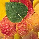 Fall N Leaves by Steve  Taylor