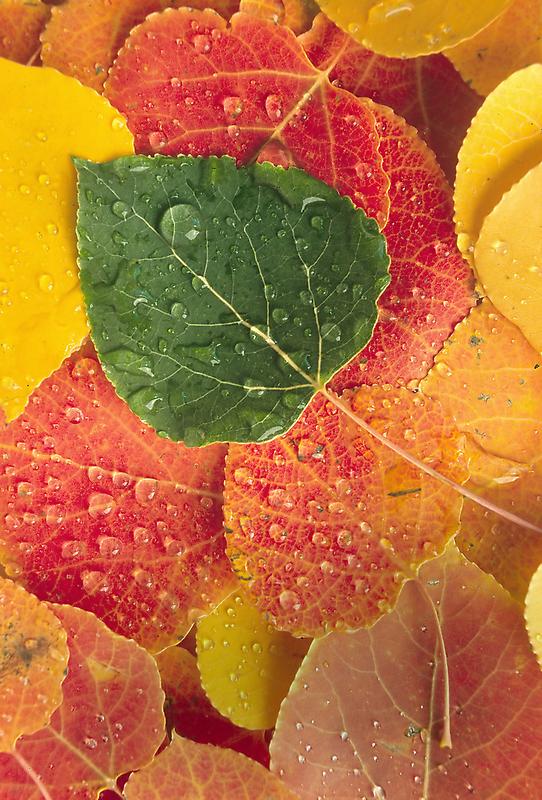 Fall N Leaves by Steve  Taylor