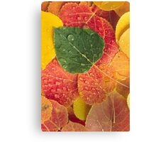 Fall N Leaves Canvas Print