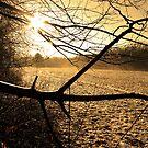 Bucks County, P.A. by dav3nport