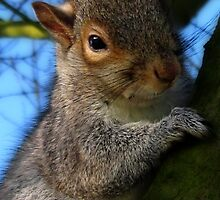 GREY SQUIRREL by Katseyes