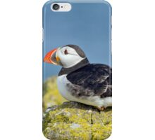 Puffin on the rocks iPhone Case/Skin