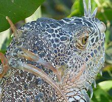 portrait of an iguana I - retrato de iguana by Bernhard Matejka