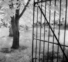 The Gate by Ann Garrett
