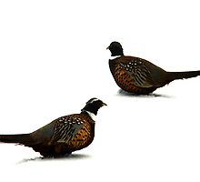 Male Pheasants in Winter by Ryan Houston