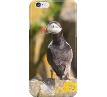 Puffin ~ Isle of May iPhone Case/Skin