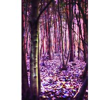 Enchanted Wood Photographic Print