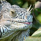portrait of an iguana III - retrato de iguana by Bernhard Matejka
