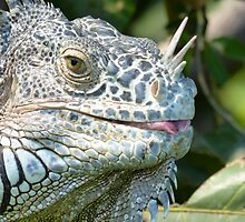 portrait of an iguana III - retrato de iguana by Bernhard Matejka
