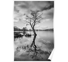 Tree Reflection at Ullswater, Lake District Poster