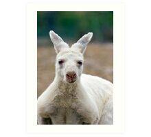 What do you mean I'm white! Aren't all Kangaroos white? Art Print