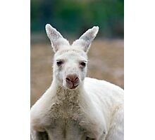 What do you mean I'm white! Aren't all Kangaroos white? Photographic Print