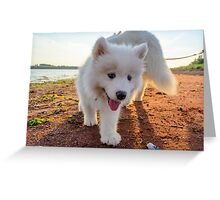 Samoyed puppy on the beach  Greeting Card