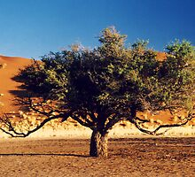 Desert Tree by Michelle Dry