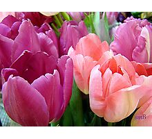 Tulip Time Photographic Print