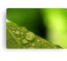 Green Leaf with Rain Drops Macro Photography Canvas Print