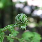 Fern by Leigh Jardine