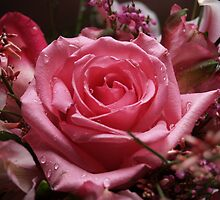 The Fragrance of a Rose by Josh Bonfili