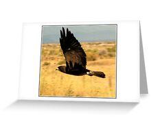 Swainson's Hawk Dark Morph Greeting Card