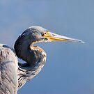Blue Heron Blues by DawsonImages