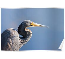 Blue Heron Blues Poster