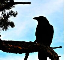 Birds On Grand Canyon's South Rim by jessonajourney