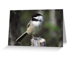 Black-Capped Chickadee - Sitting Pretty Greeting Card