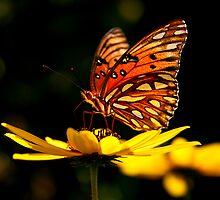 Beauty Aglow by Jonicool