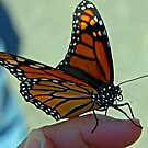 Butterfly Finger by Robin D. Overacre