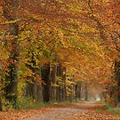 Autumnal colour outburst in beech-tree lane by jchanders