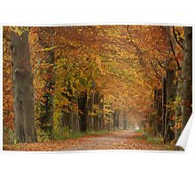 Autumnal colour outburst in beech-tree lane Poster
