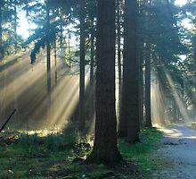 More wonderful lightbeams in a Dutch forest by jchanders