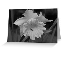 The Fly And The Daffodil Greeting Card