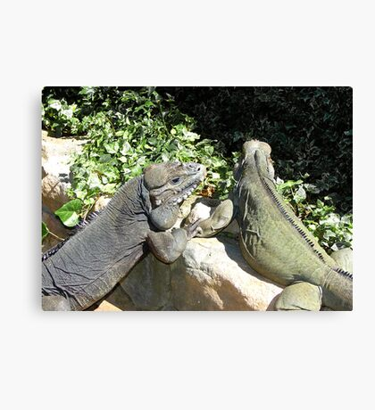 """THINK LIZARDS: """"The Proposal...Lizards in Love"""" Canvas Print"""