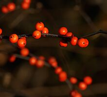 Winterberry Holly by Margaret Barry
