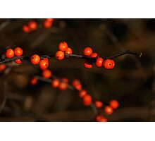 Winterberry Holly Photographic Print