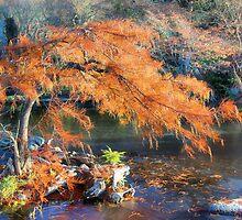 Bald Cypress by SuddenJim