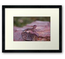 Friend Gecko.  Framed Print
