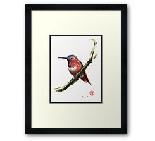 Little Hummer - Prisma pencil & acrylic painting Framed Print