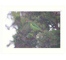 Parrots Feasting  Art Print