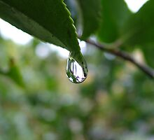 rain drop by Fiona Moran