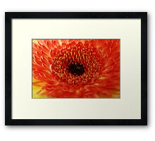 Orange... Framed Print