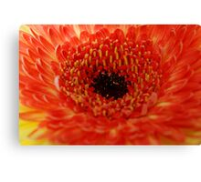 Orange... Canvas Print